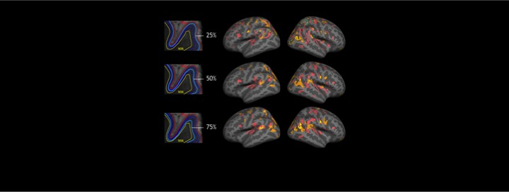 Cortical Laminar Analysis